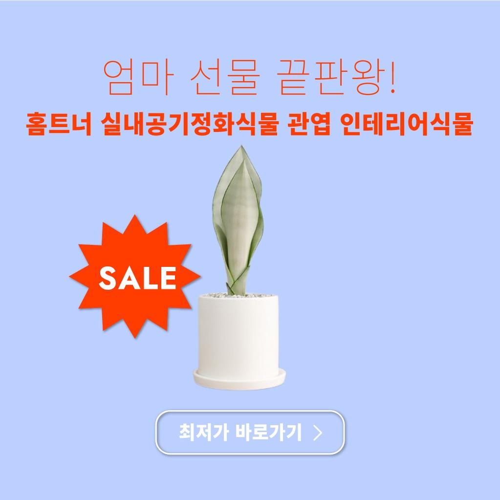 공기정화 식물 선물
